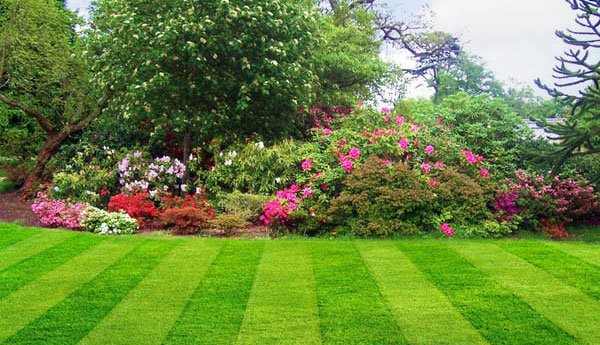 jardin-bien-cuidado